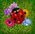 Windows 8 Minesweeper flowers with ladybirds