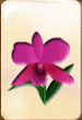 traditional-mahjong-flower