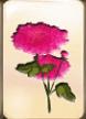 traditional-mahjong-flowers